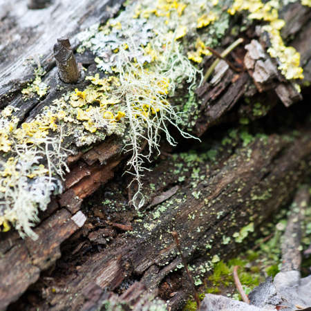 decaying: Moss Covered Decaying Log Stock Photo