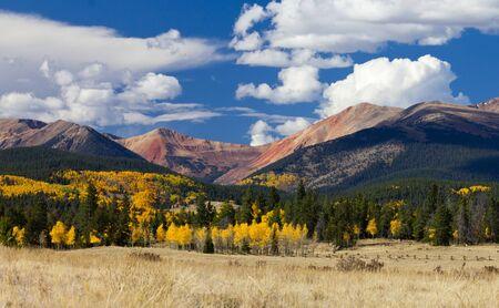 Oto�o bosque de �lamos en las Monta�as Rocosas de Colorado Foto de archivo - 13447975