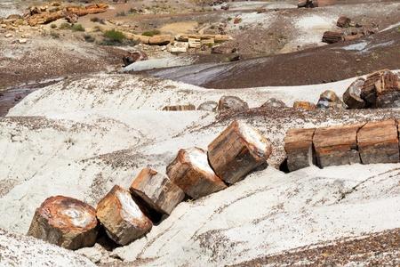 petrified fossil: Broken Tree Trunk in Petrified Forest National Park Arizona