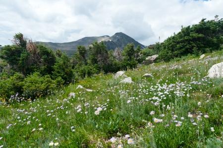 야생화는 콜로라도 산에서 초원 덮여
