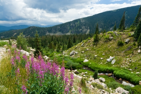 Colorado mountain landscape with summer wild flowers