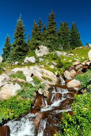 colorado mountains: Waterfall surrounded by wildflowers in the Colorado mountains landscape