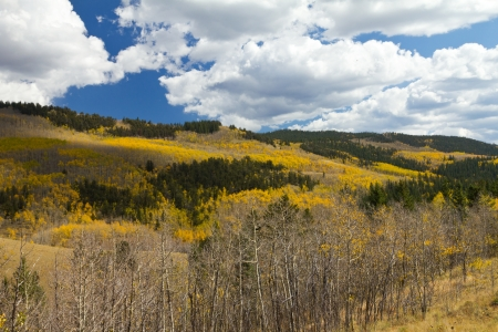 Autumn Aspen Forest in the Colorado Mountains photo