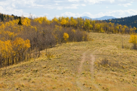 Dirt Path Through Fall Aspen Forest Colorado Wilderness photo