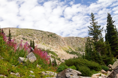 Colorado Mountain Summer Flowers Landscape photo
