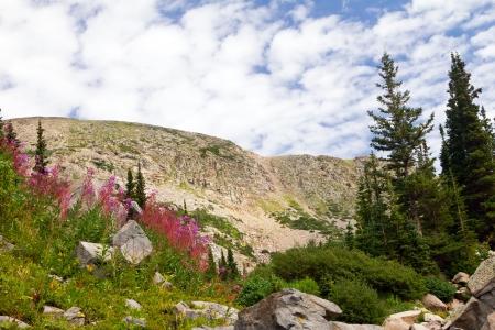 alpine tundra: Colorado Mountain Summer Flowers Landscape Stock Photo