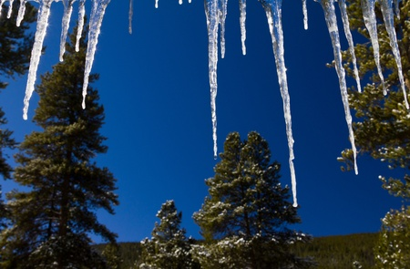 Icicles and Forest Winter Background Landscape photo