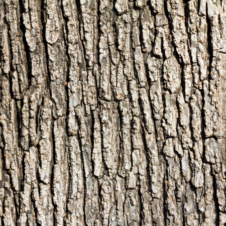 bark background: Old Wood Tree Texture Background Pattern Stock Photo