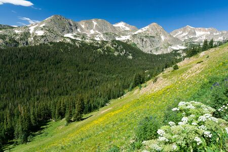 yellow wildflowers: Mountain wildflowers cover the Colorado landscape Stock Photo