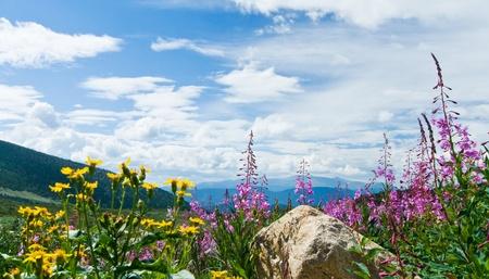 꽃은 콜로라도 록 키 마운틴 여름 풍경에 피는 스톡 콘텐츠