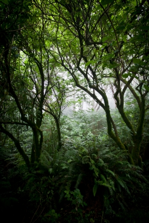 Dark foggy forest on the Northern California coast photo