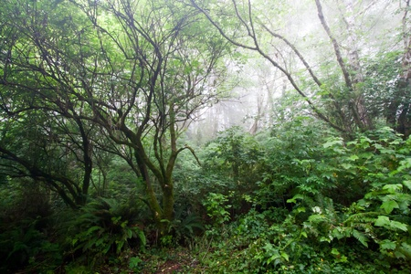 Foggy haunted forest on the Northen California coast photo