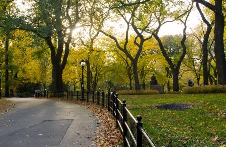 elm: Central Park, New York City - Sunlight shines through golden fall tree leaves