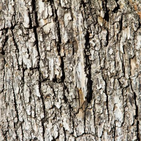 elm: Rough old wood tree bark background texture Stock Photo