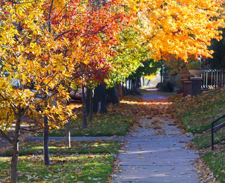 denver colorado: Fall trees above a shaded city sidewalk in Denver, Colorado