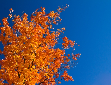 autumn colour: Bright colorful orange fall tree leaves on blue sky background Stock Photo
