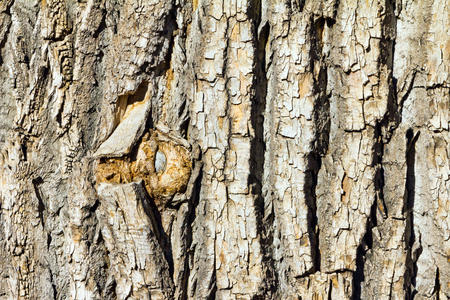 Thick wooden bark on an old tree background texture Stock Photo - 24333006