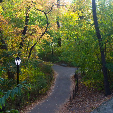 new path: Path through colorful fall trees in Central Park, New York City USA Stock Photo