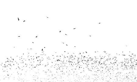 Zwerm zwarte vogels op een witte achtergrond