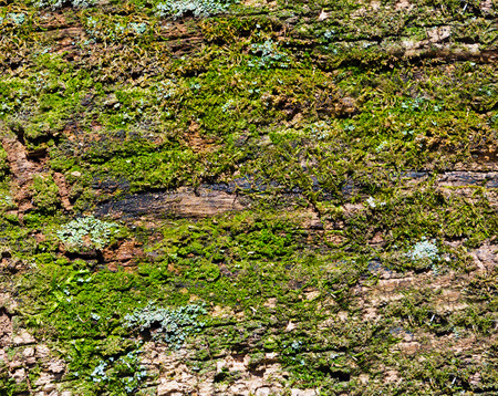 Old mossy rotten wood background texture photo