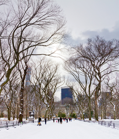 elm: Crowds of people enjoy the recent snowfall in Central Park after a big winter blizzard hits downtown Manhattan, New York City.