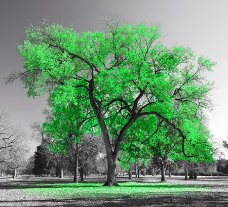 Big green tree in a black and white landscape