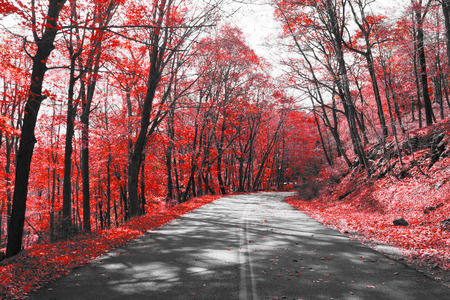 Empty highway through red forest in black and white landscape