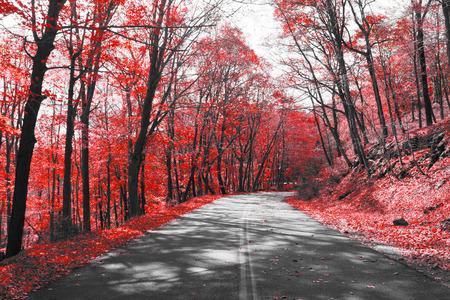 Lege snelweg door rood bos in zwart-wit landschap Stockfoto