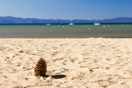 tahoe: Pine cone on an empty beach at Lake Tahoe, California