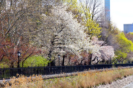 new path: Colorful spring trees along a path through Central Park in New York City Stock Photo