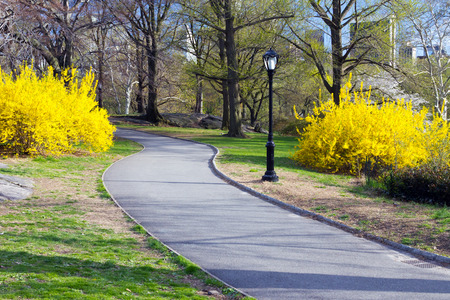 the city park: Trail through Central Park in Spring, New York City