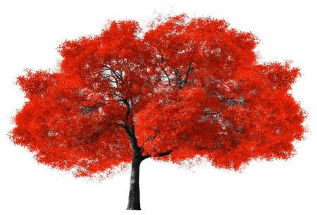 huge tree: Big red tree isolated on white background Stock Photo