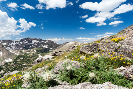 rocky mountains colorado: Wildflowers blooming in wilderness landscape of Colorado Rocky Mountains