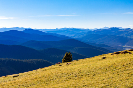 alpine tundra: Mountain tundra landscape rises above a vast forest wilderness background in the Colorado Rocky Mountains