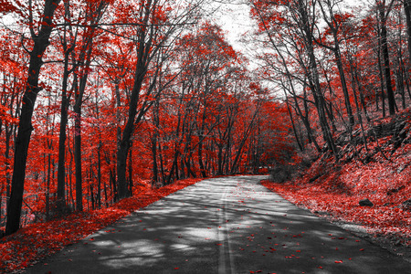 Highway through red fall trees in black and white landscape Stock Photo