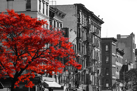 Red fall tree in black and white NYC street scene on 2nd Avenue in the East Village of Manhattan, New York City