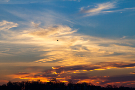 Wisps of clouds hanging in the sky during a colorful sunset with a bird soaring high above the horizon