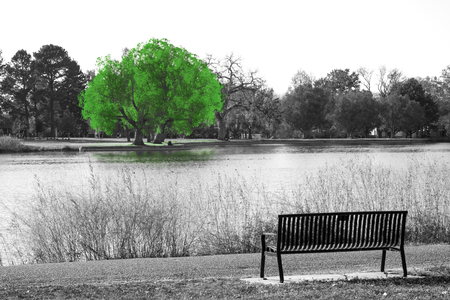 Green tree in black and white landscape scene with an empty park bench overlooking the water Reklamní fotografie