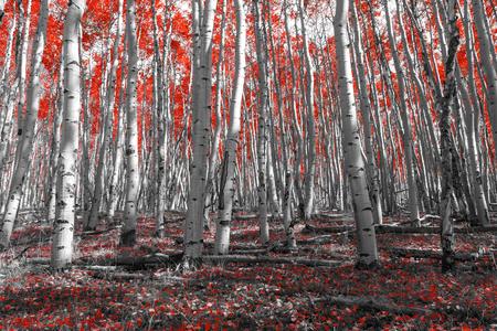 背の高い赤い木の天蓋の下にカラフルな秋の葉で覆われた森の床 写真素材