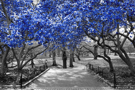 Canopy of blue trees in surreal black and white landscape scene in Central Park, New York City Reklamní fotografie