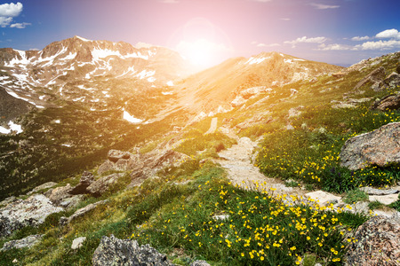 Hiking trail winds through fields of colorful wildflowers with sunlight shining over a distant mountain range in the Colorado wilderness