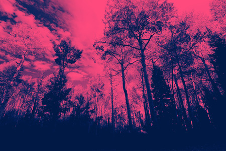 Pink and blue forest trees landscape Stock Photo