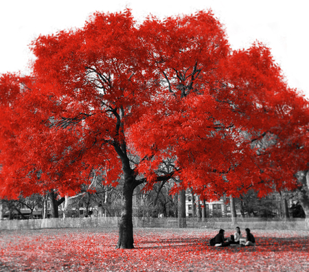 Group of women sitting under a red tree in a black and white landscape in New York City Stock Photo