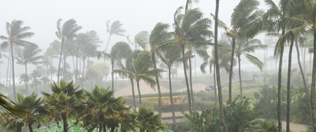 Palm trees blowing in the wind and rain as a hurricane approaches a tropical island coastline Stock Photo