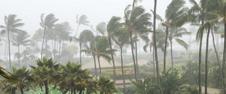Palme mosse dal vento e dalla pioggia mentre un uragano si avvicina alla costa di un'isola tropicale
