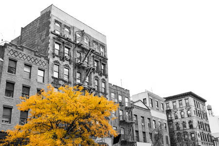 Big yellow tree on the street in front of black and white buildings in the East Village of Manhattan New York City NYC Фото со стока