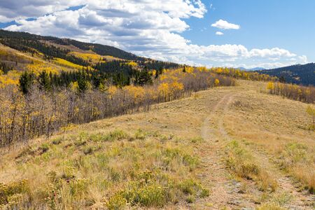 Colorado fall mountain landscape scene with dirt path climbing into a golden aspen forest 版權商用圖片
