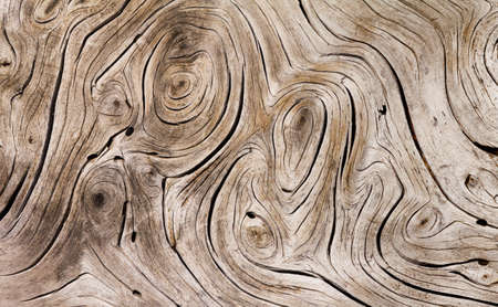Weathered wooden texture on an old tree branch with twisted swirly patterns