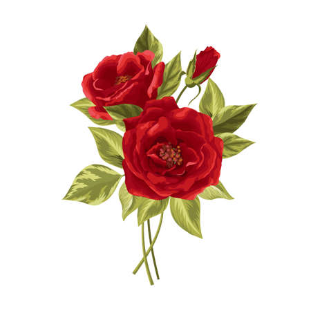 Beautiful bouquet of red roses isolated on white.