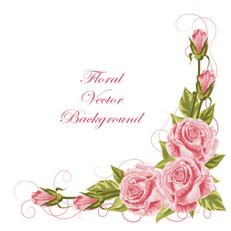Corner composition with pink roses and green leaves. Vector illustration isolated on white background.